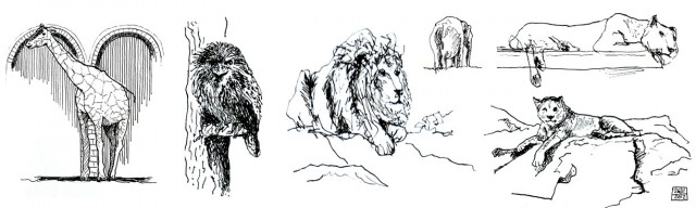 Sketches of animals at the Berlin Zoo