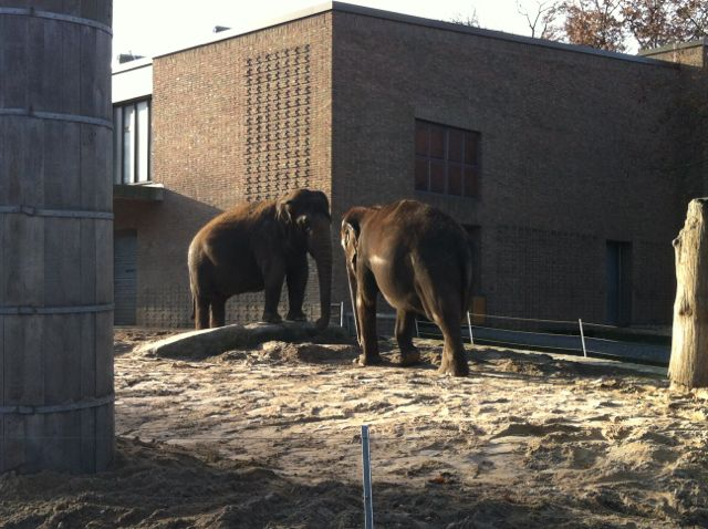 Elephants at the Berlin Zoo