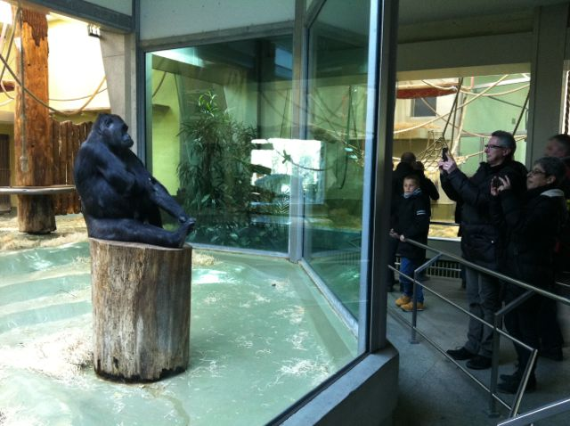 Gorilla at the Berlin Zoo